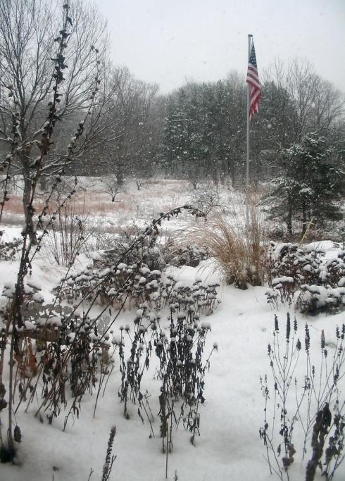First snow on my garden.