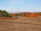 Autumn Fields