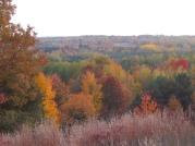 A Michigan Autumn with Little Bluestem