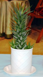 """Horticulture Division """"Indoor Specialties"""" exhibits 6 to 15 years old"""