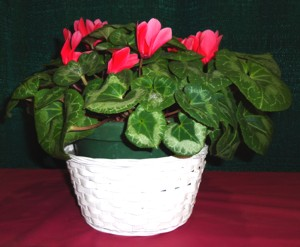 Horticultural Division Flowering Container Plants