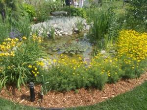 Backyard lily pool.