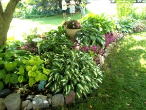 A planting of shade plants.