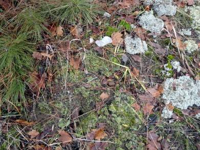 Moss underfoot