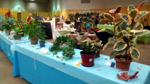 District IIB Flower Show another view