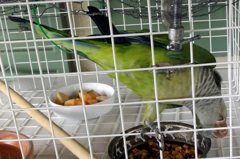 Parry the parrot