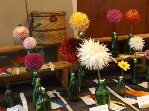 Horticulture: Bulbs: Dahlias