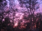 Trees in Dusk Sky