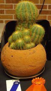 Cactus winner