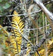 photo of plant's complex societies