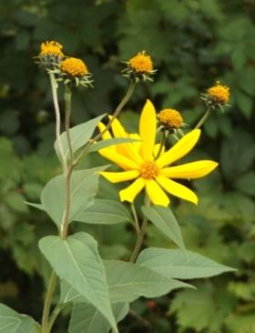 smarty-plants