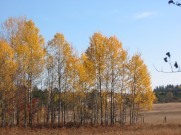 Fall Line