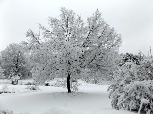 photo of last night's snow