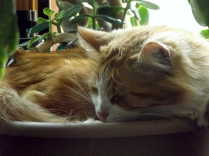 Cat Andy sleeping in plant pot.