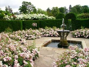 Photo of Hever Castle Rose Garden.